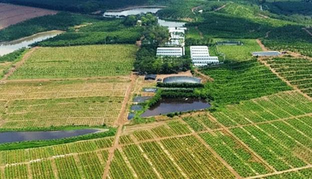 mo hinh farmstay